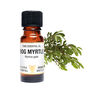 Bog Myrtle Essential Oil  10ml
