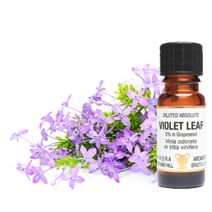 Violet Leaf Abs Diluted (5%) 10ml