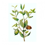 Jojoba Vegetable Oil