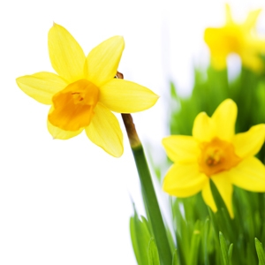 Spring Cleaning - The Natural Way!