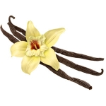 Vanilla Extract Essential Oil
